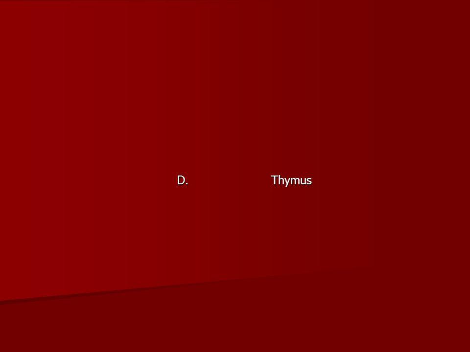 D. Thymus