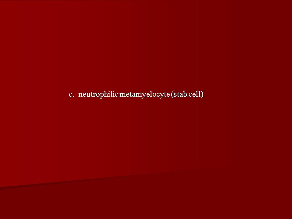 c. neutrophilic metamyelocyte (stab cell)