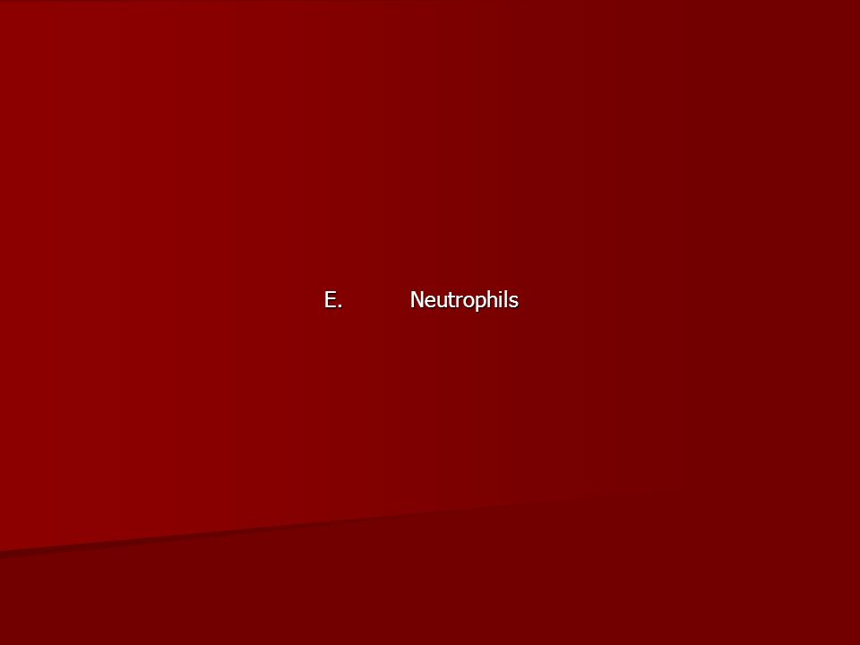 E. Neutrophils