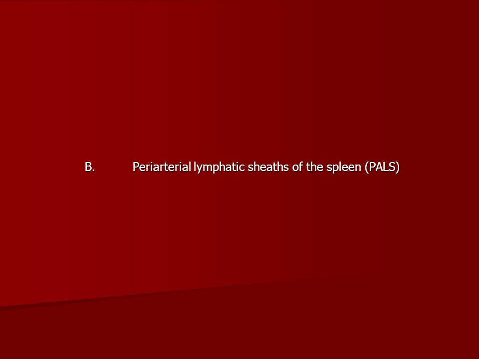B. Periarterial lymphatic sheaths of the spleen (PALS)