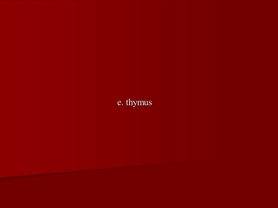 e. thymus
