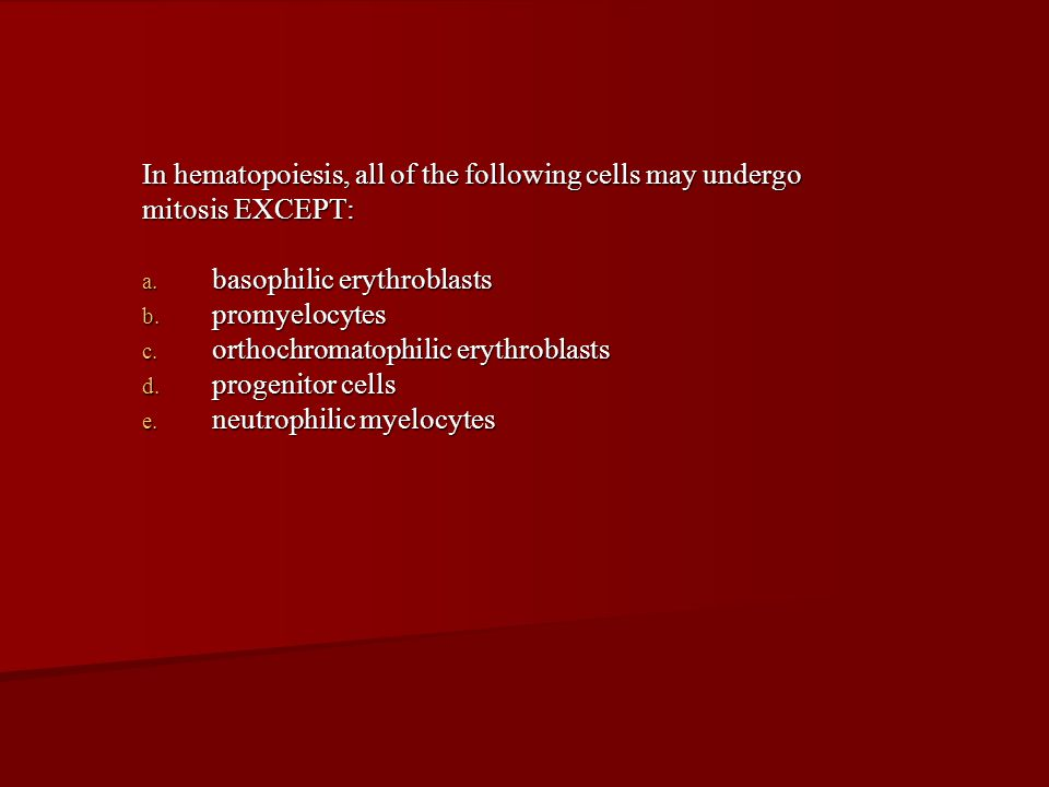 In hematopoiesis, all of the following cells may undergo