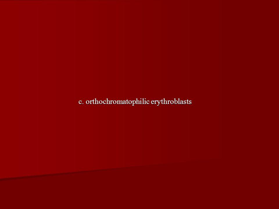c. orthochromatophilic erythroblasts
