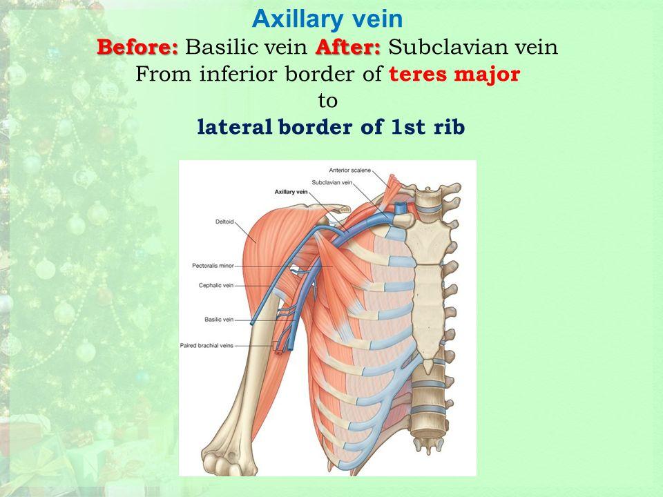 1st rib anatomy