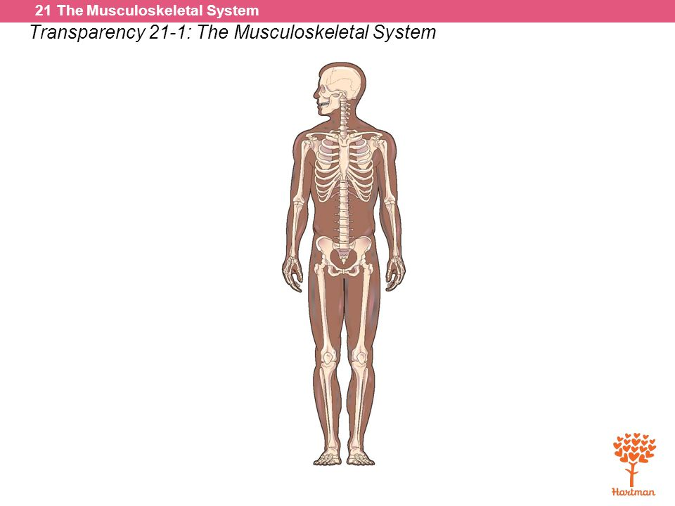 Dorable General Anatomy And Musculoskeletal System Collection ...