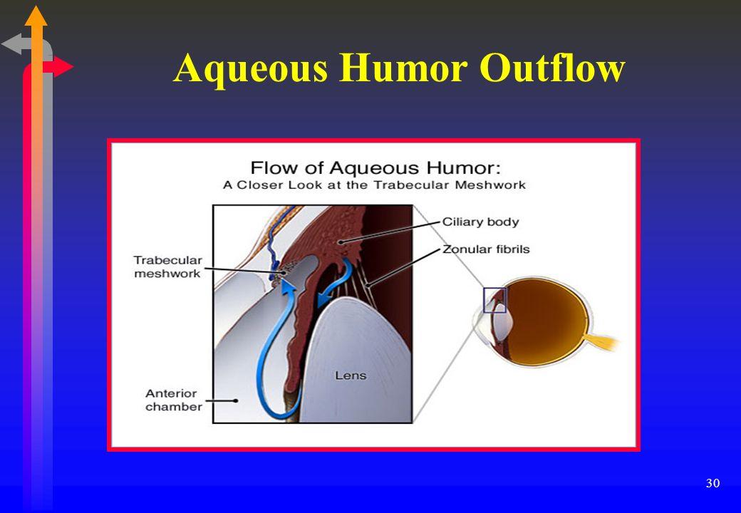 aqueous humor