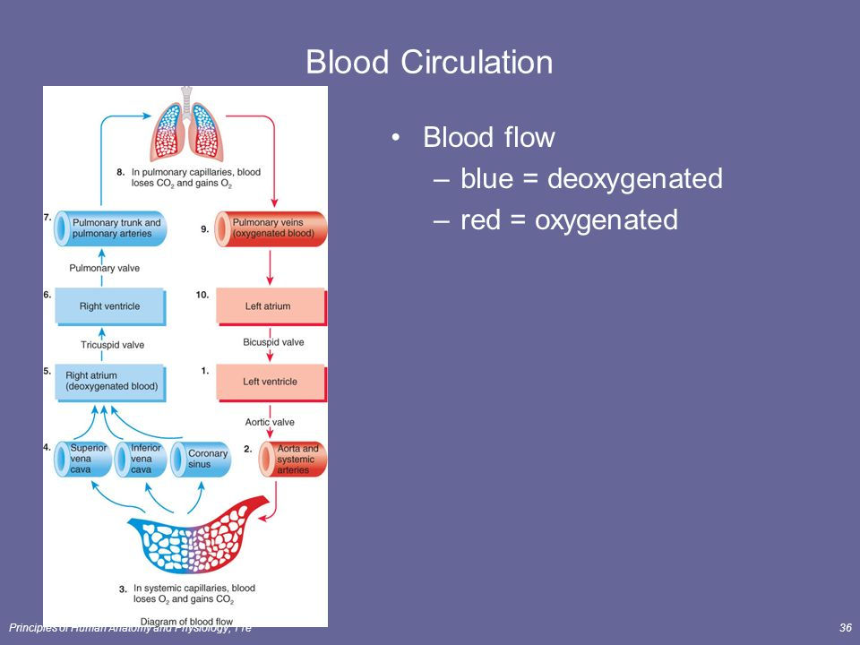 How The Heart Functions And Pumps Blood - YouTube