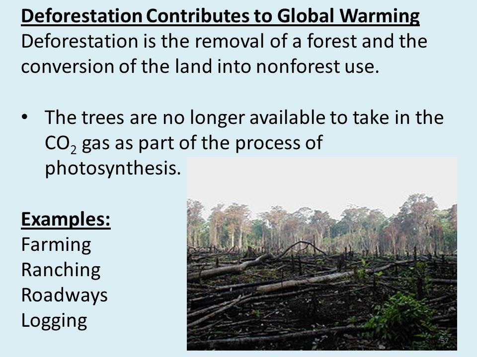 globalization of deforestation Globalization of deforestation before you can understand anything surrounding deforestation, you must know what it actually is many people believe that it is just cutting down trees, specifically in the rainforests.