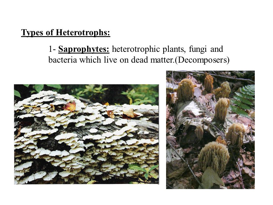 Types of Heterotrophs: