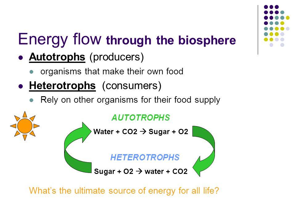 Energy Flow Through The Biosphere on Food Chain Energy Flow Through