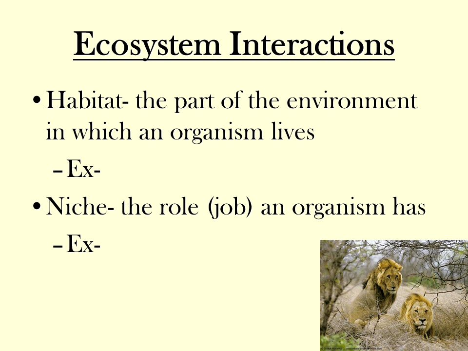 Ecology The world around us. - ppt video online download