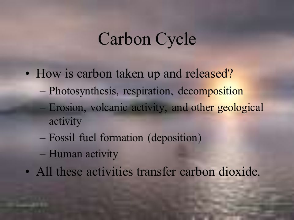 Carbon Cycle How is carbon taken up and released