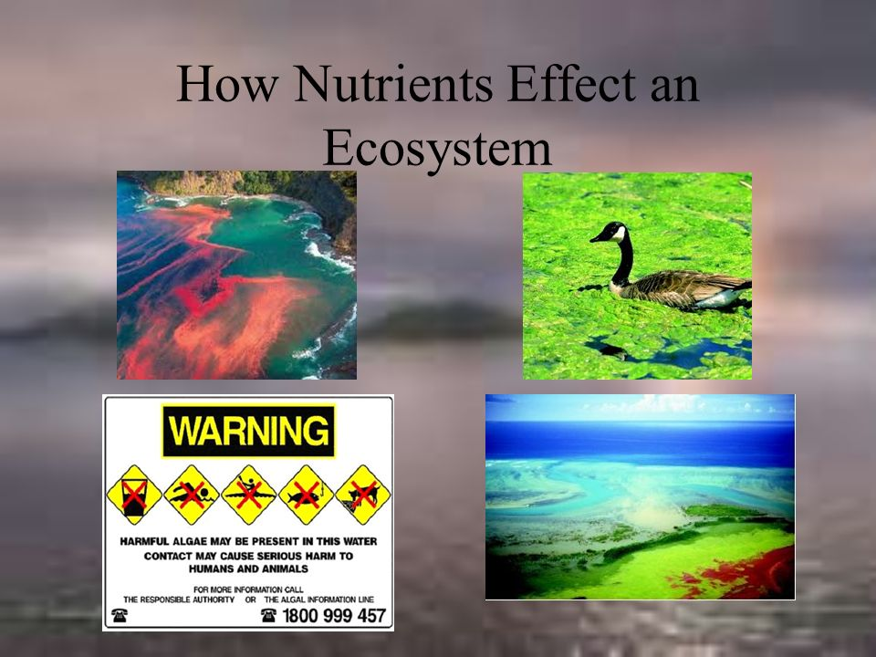 How Nutrients Effect an Ecosystem