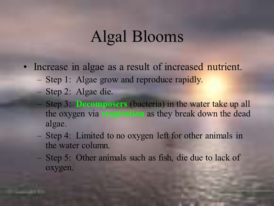 Algal Blooms Increase in algae as a result of increased nutrient.