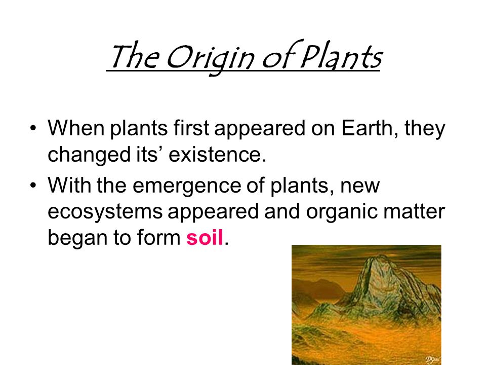 Plant notes part 1 plant notes part 1 plant diversity for Origin and formation of soil