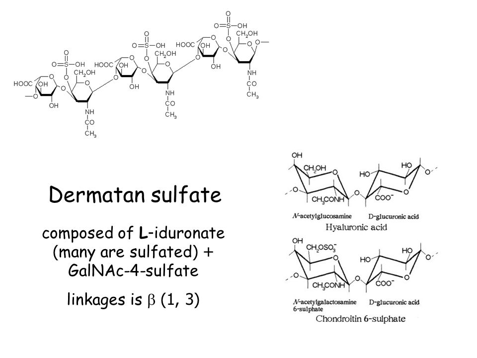 composed of L-iduronate (many are sulfated) + GalNAc-4-sulfate