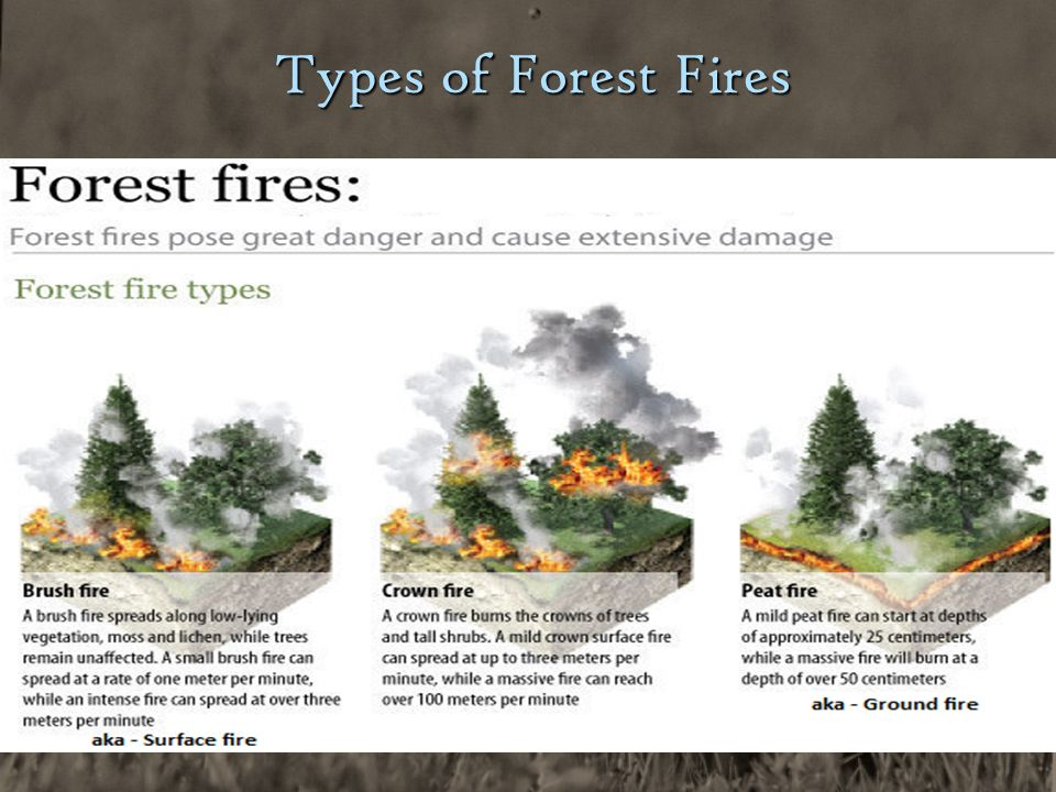 Causes and Effects of Wildfires