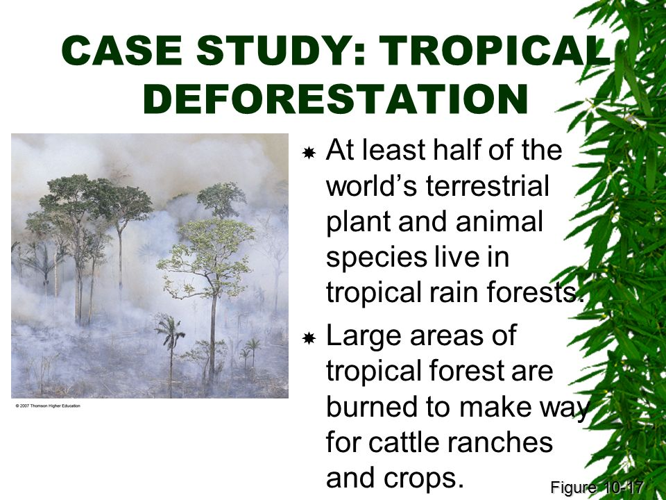 cattle ranching and its increasing affect on deforestation essay The growth in cattle ranching has expanded extremely rapidly here in 1990 there were around 26 million head of cattle in brazilian amazonia but in 2006 this figure had risen to 737 million viii deforestation in this area is predominately caused by livestock farming by small-scale traditional ranchers and by large-scale commercial intensive.