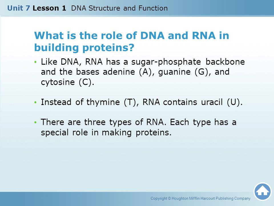 the role of dna in protein 2005-9-15 the role of chromatin proteins in dna damage recognition and repair mini-review  preferential binding of high mobility group 1 protein to uv-damaged dna role.