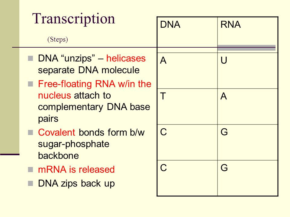 DNA to PROTEIN 2 step process of transcription and ...