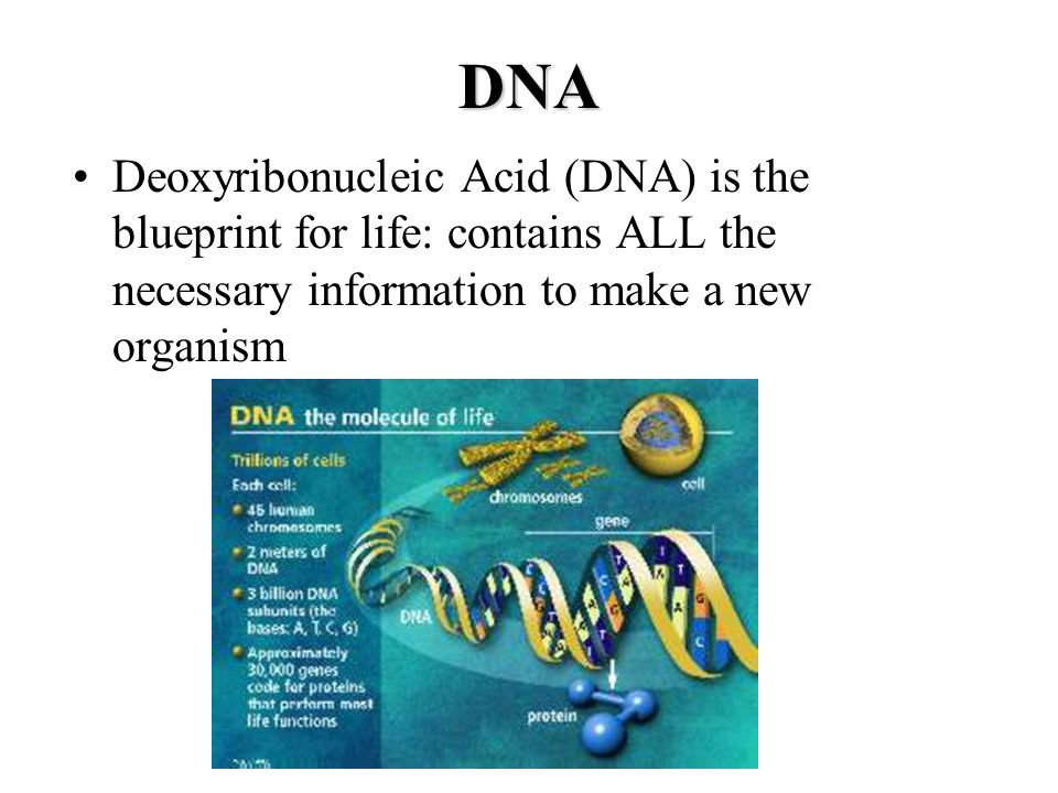 Dna rna proteins the molecules of life ppt video online download 14 dna deoxyribonucleic malvernweather Images