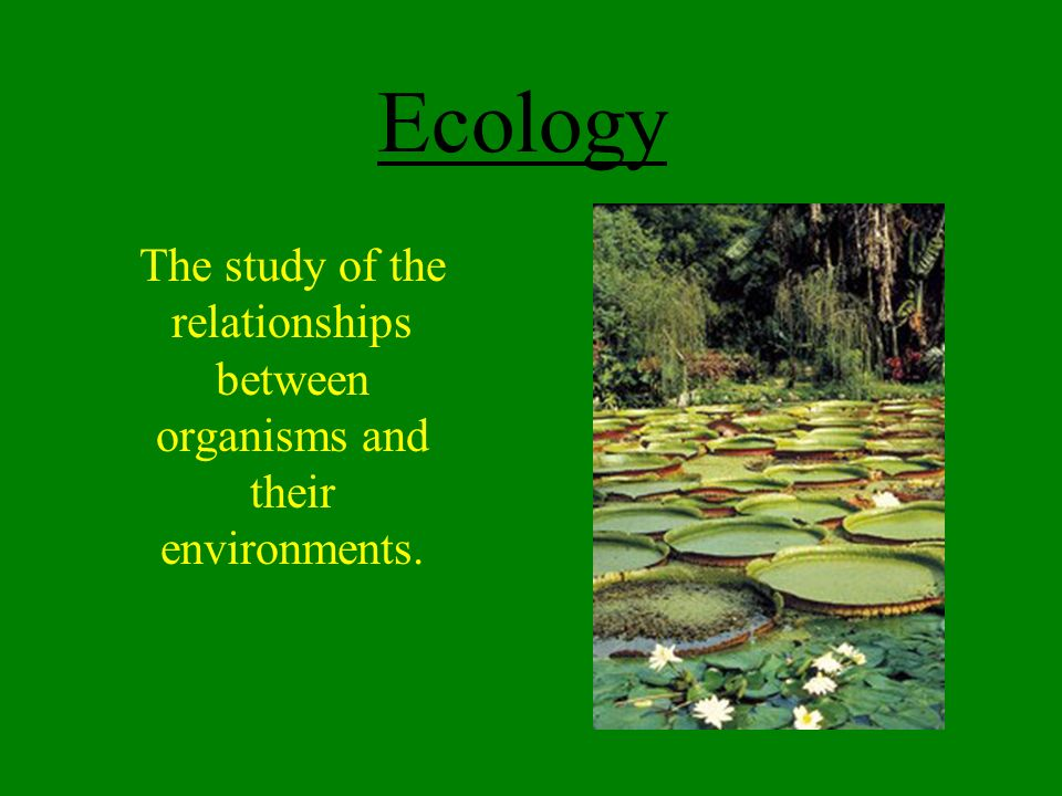 relationship between organisms and environment 11 relationships between human activity and the environment  an ecosystem  includes all the living organisms (humans, plants, animals, micro-organisms).