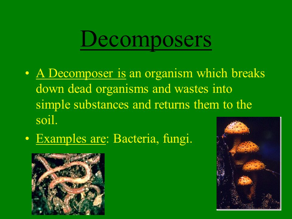 Decomposers Bacteria 38290 | BURSARY