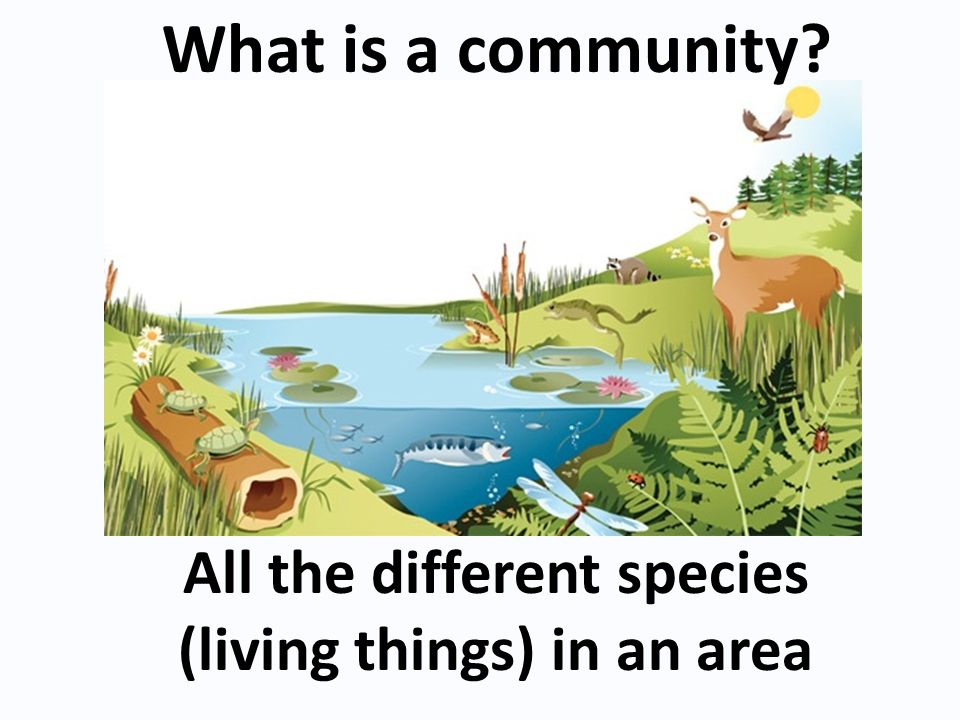 All the different species (living things) in an area