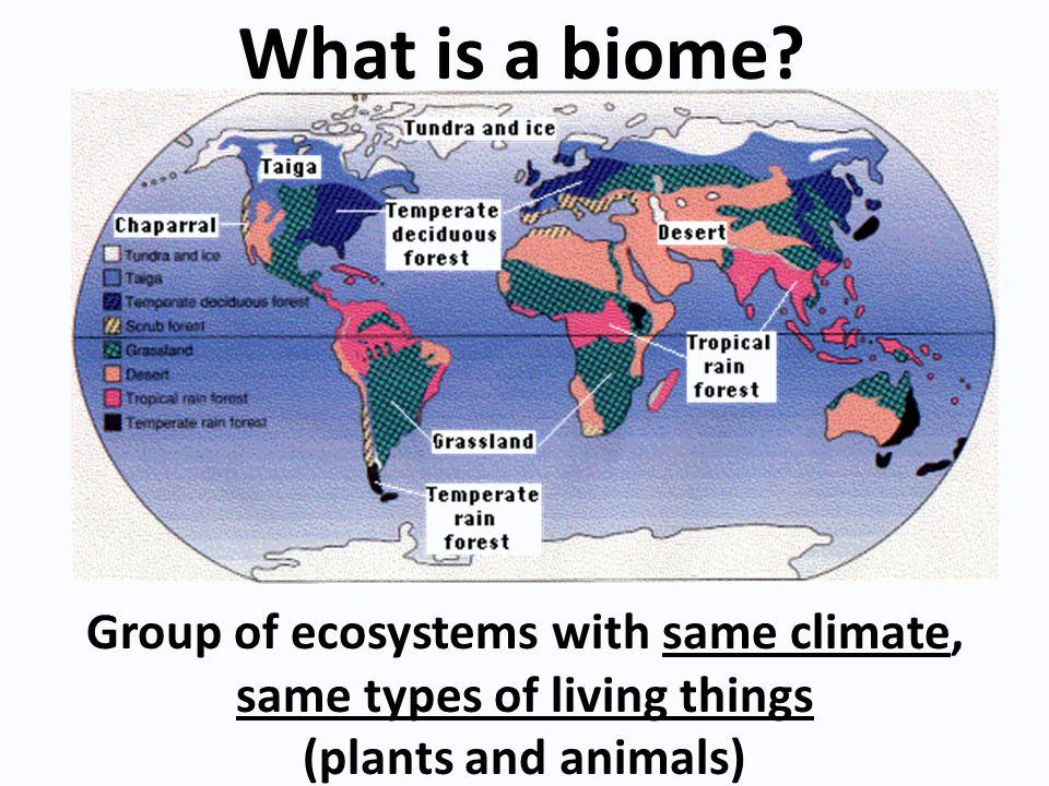 Group of ecosystems with same climate, same types of living things