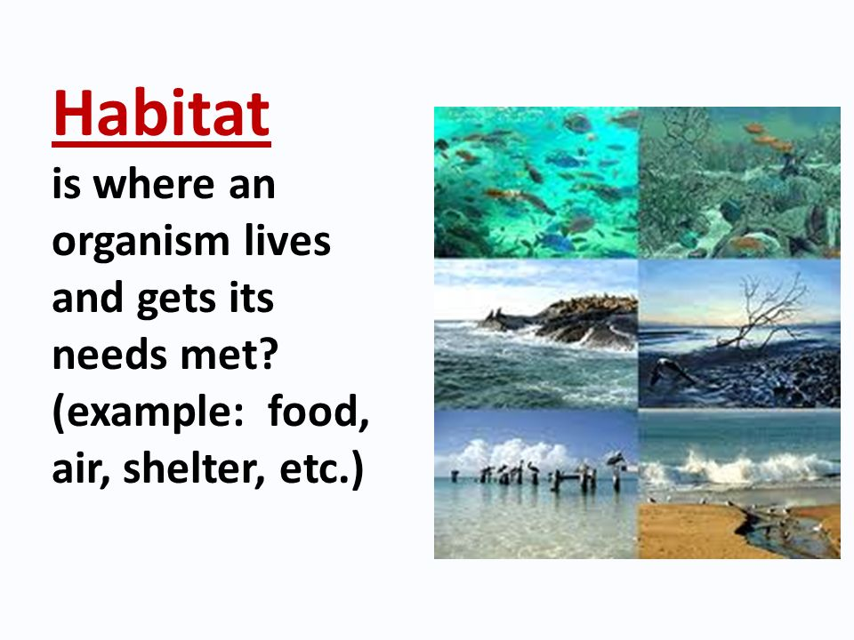 Habitat is where an organism lives and gets its needs met