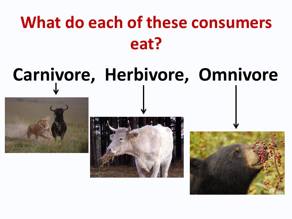 What do each of these consumers eat