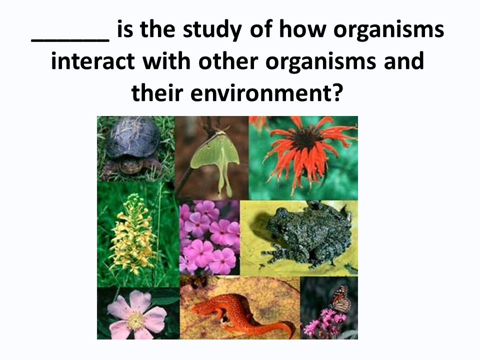 ______ is the study of how organisms interact with other organisms and their environment