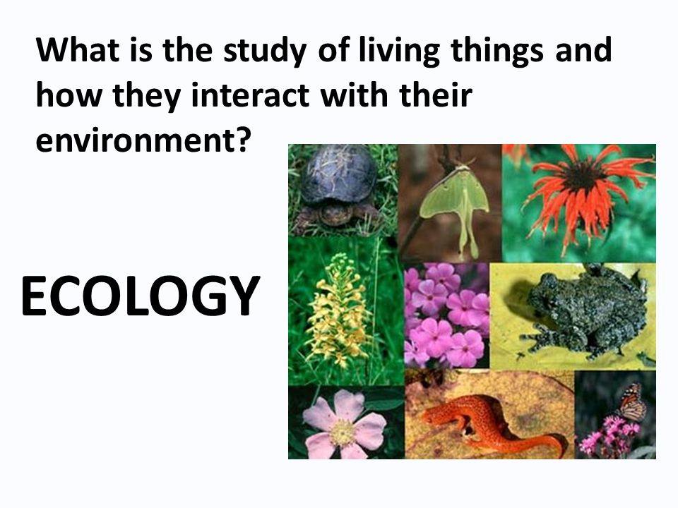 What is the study of living things and how they interact with their environment