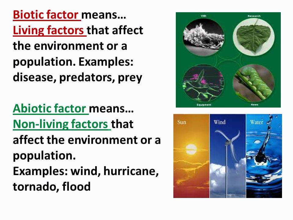 Biotic factor means… Living factors that affect the environment or a population. Examples: disease, predators, prey.