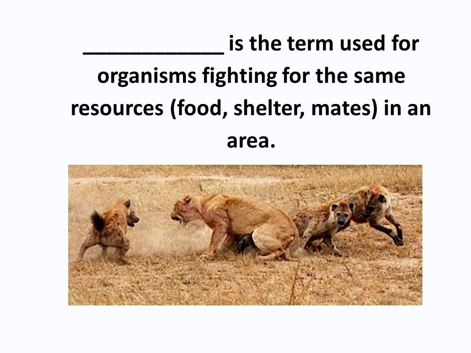 ____________ is the term used for organisms fighting for the same resources (food, shelter, mates) in an area.