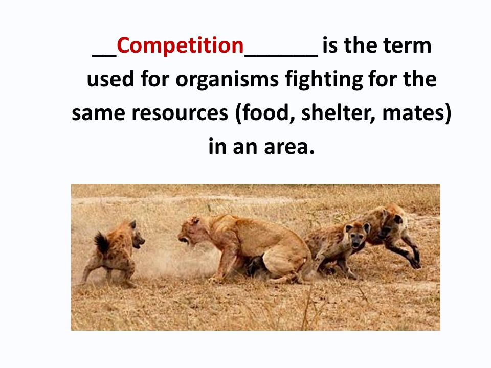 __Competition______ is the term used for organisms fighting for the same resources (food, shelter, mates) in an area.