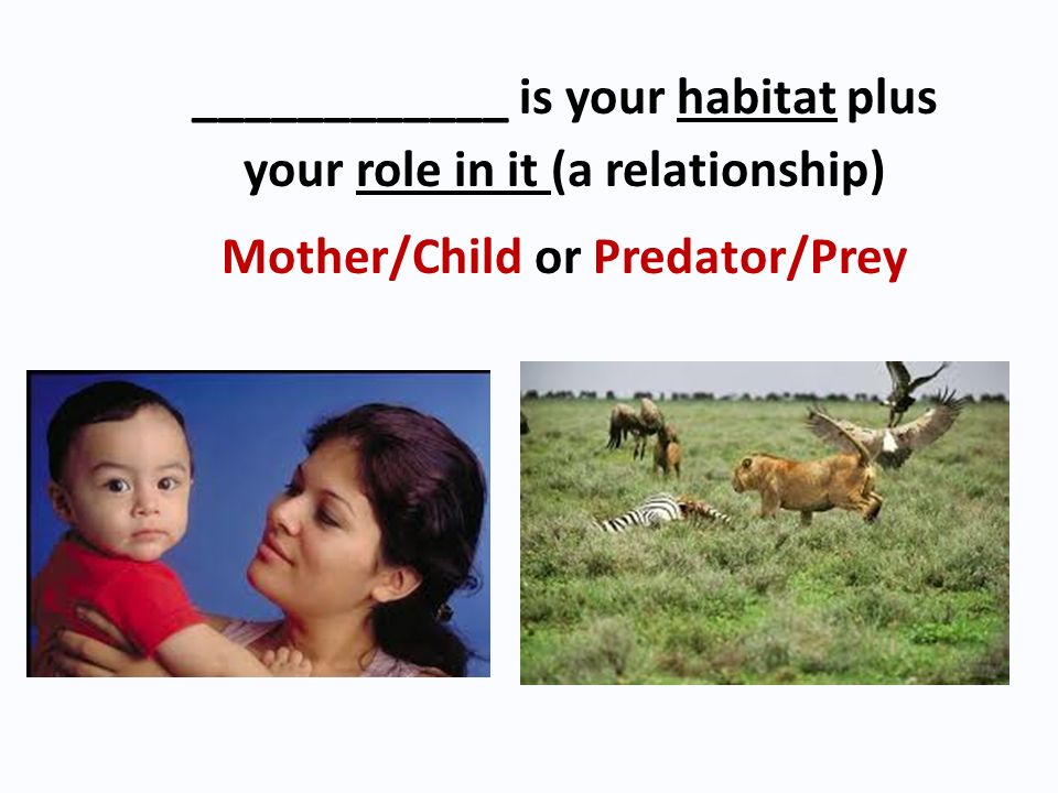 ____________ is your habitat plus your role in it (a relationship)
