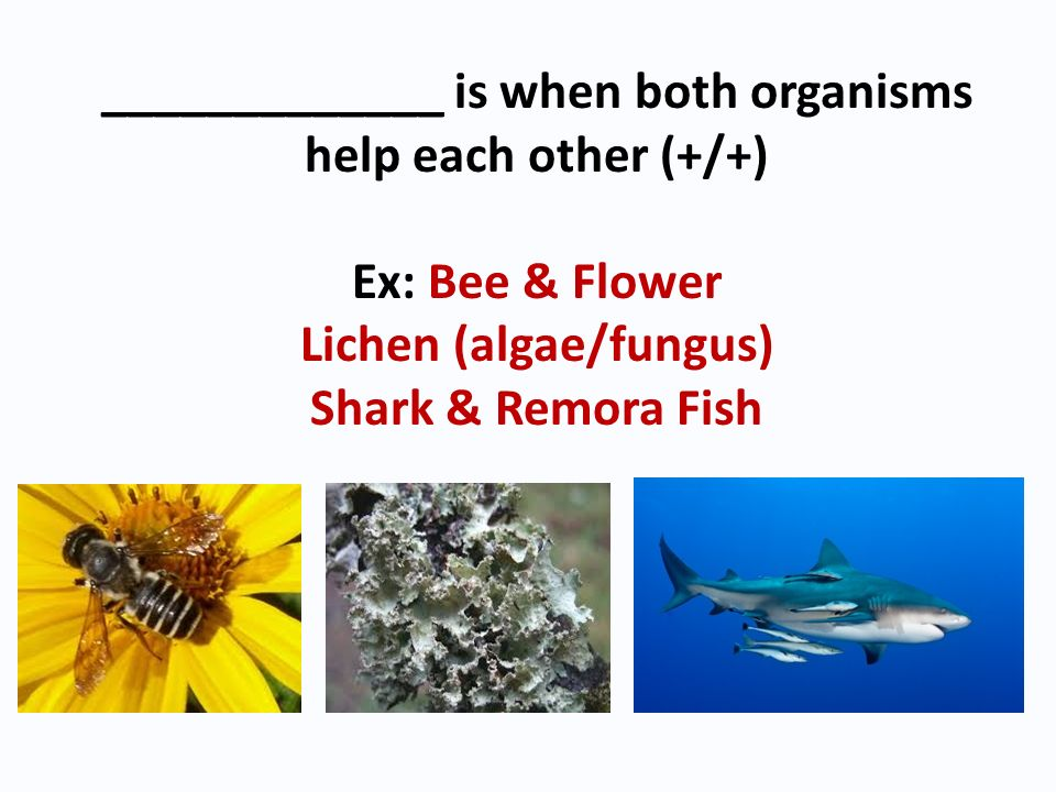 _____________ is when both organisms help each other (+/+)