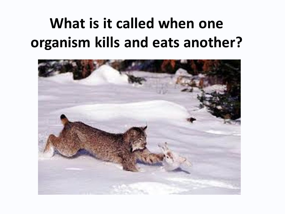What is it called when one organism kills and eats another