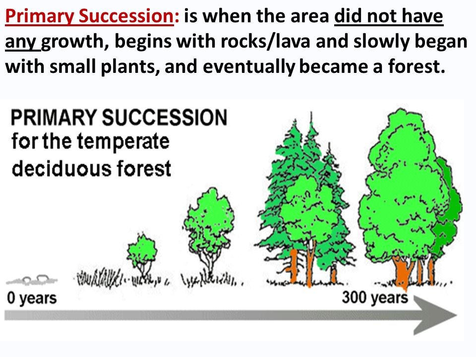 Primary Succession: is when the area did not have any growth, begins with rocks/lava and slowly began with small plants, and eventually became a forest.