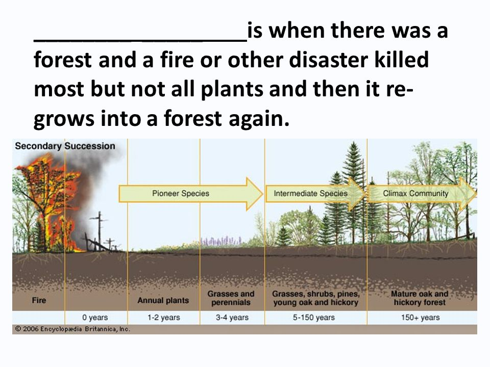 ________ _____ is when there was a forest and a fire or other disaster killed most but not all plants and then it re-grows into a forest again.
