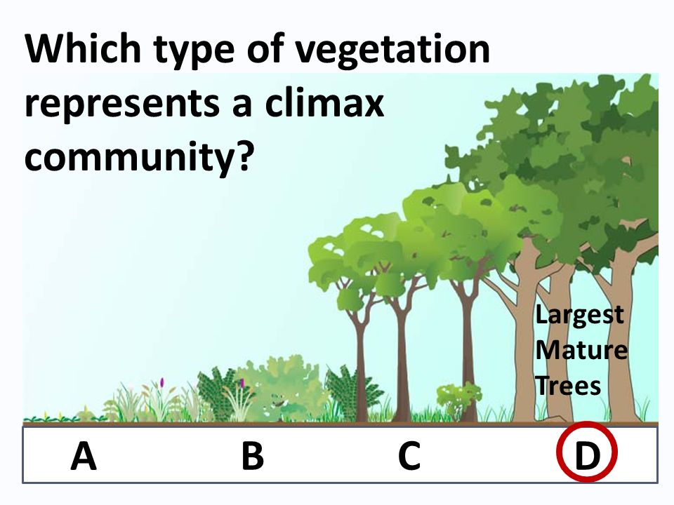 Which type of vegetation represents a climax community