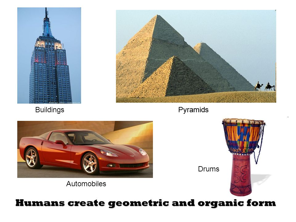 Humans create geometric and organic form