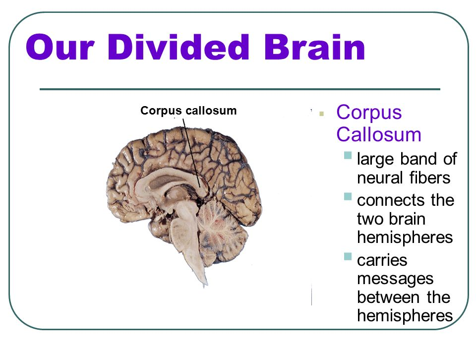 The Cerebral Cortex. - ppt video online download
