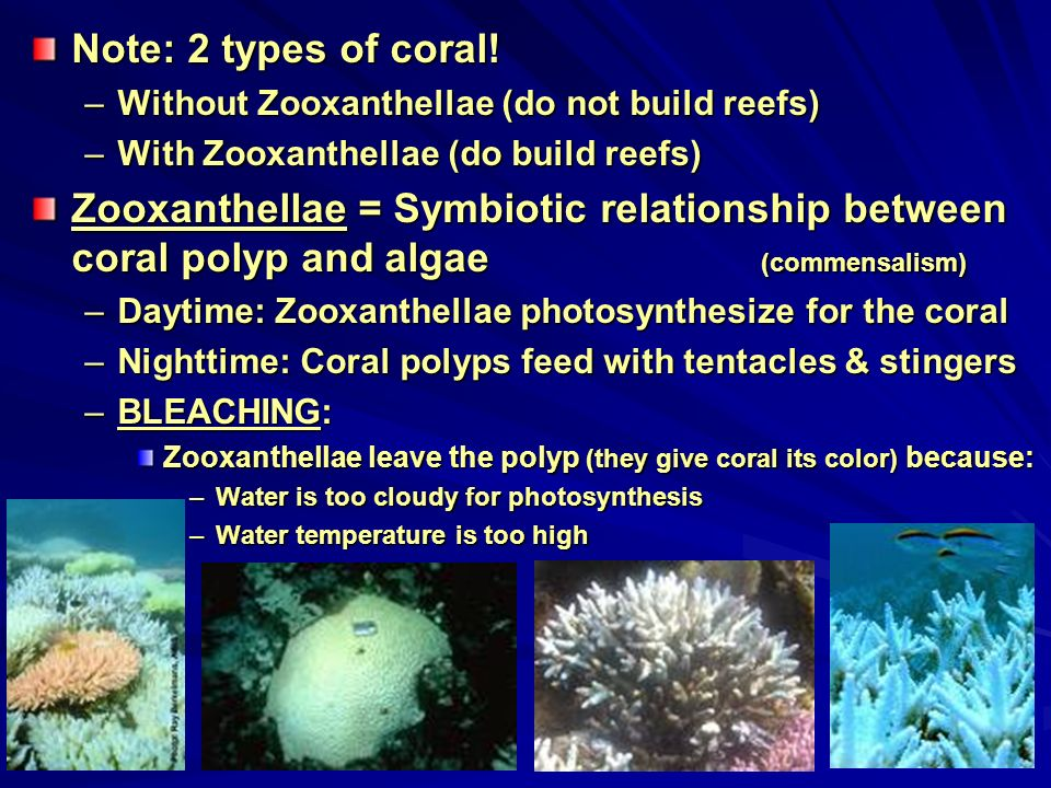 relationship between polyp and zooxanthellae