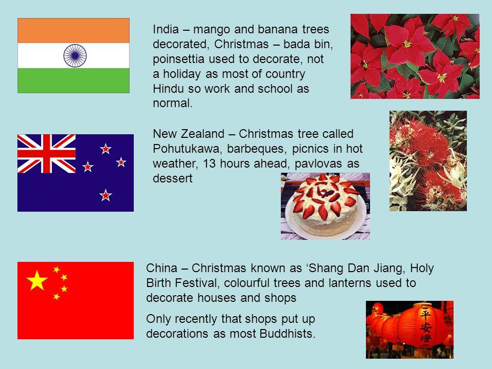 India – mango and banana trees decorated, Christmas – bada bin, poinsettia  used to - India €� Mango And Banana Trees Decorated, Christmas €� Bada Bin