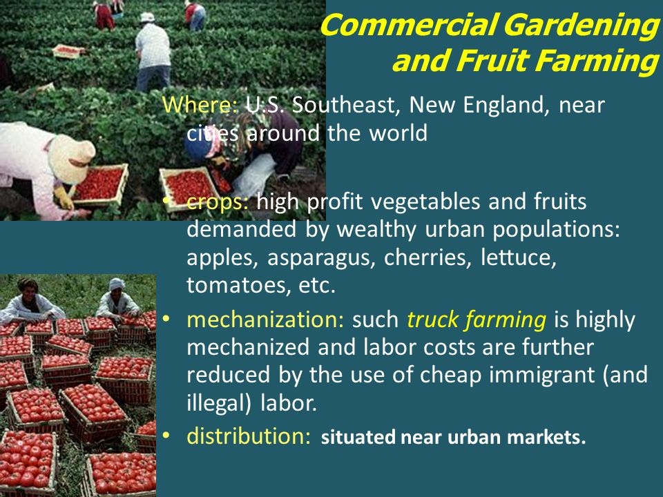 14 Commercial Gardening And Fruit Farming
