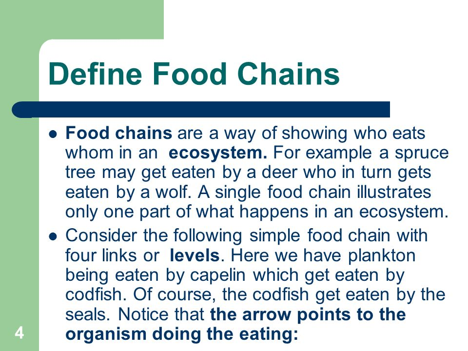Define Consumer In A Food Chain