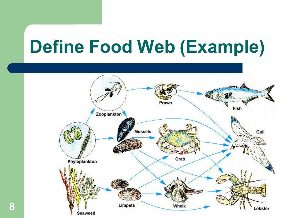 Example Of Food Web | | 2018 january calendar