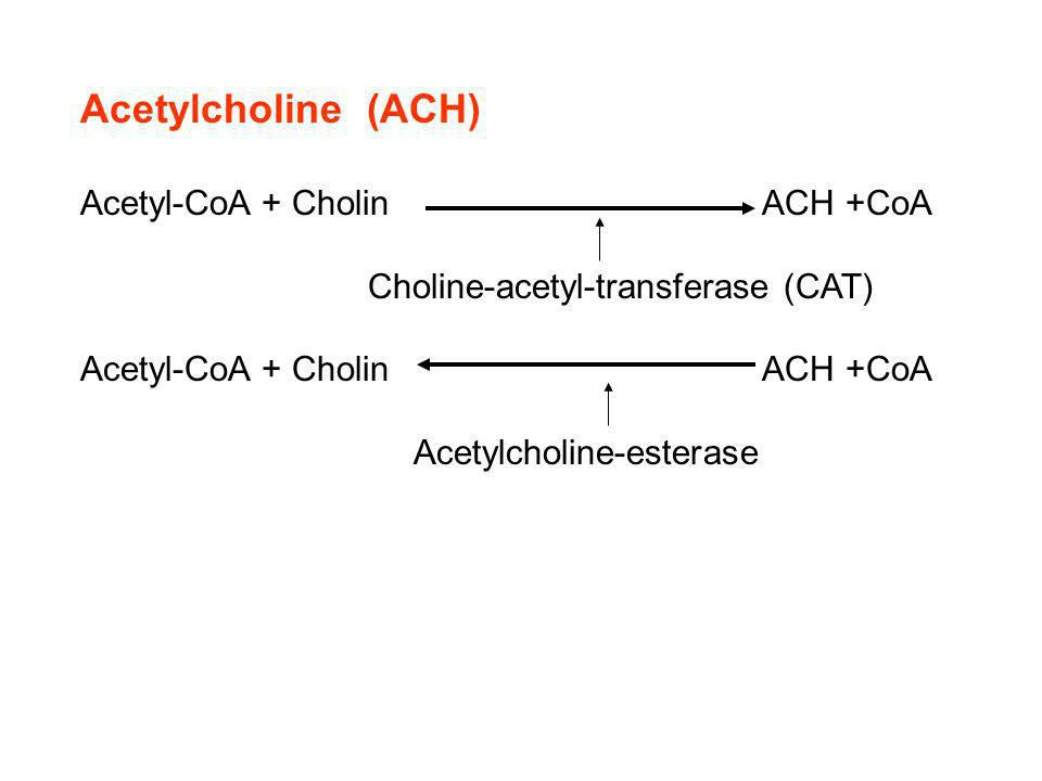 Acetylcholine (ACH) Acetyl-CoA + Cholin ACH +CoA